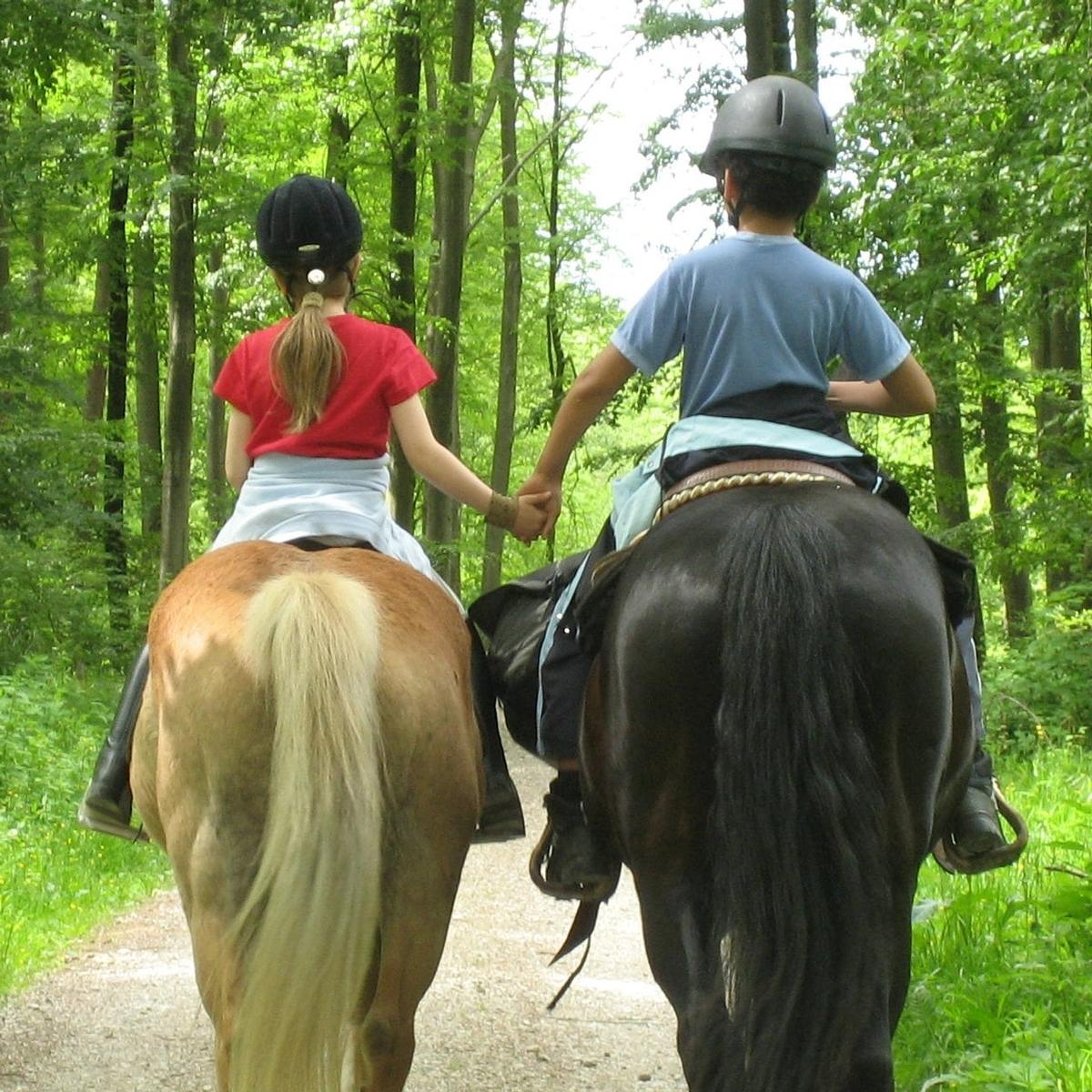 Horse Camp 1